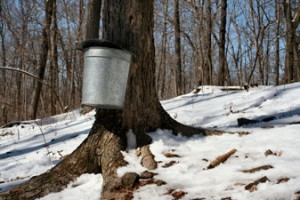 NE Maple Producers