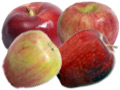 New England PYO Apples