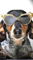 Maine Pet Friendly Hotels, Inns, Resorts