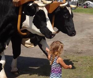 NE Agricultural Fair