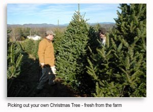 VT TRee Farms