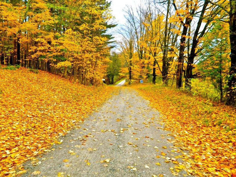 New England Autumn Colors